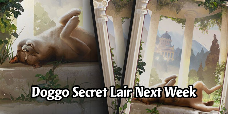 Secret Lair Returns Later This Month With a Dog Sleeve in MTG Arena - International Dog Day 2020