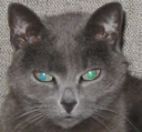 madcat's Avatar